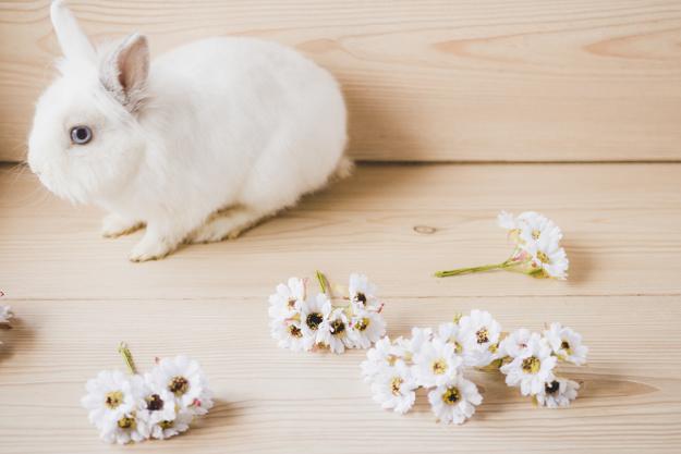 acheter clapier lapin