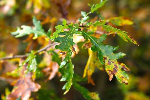 entretenir un espace vert - Sol bio