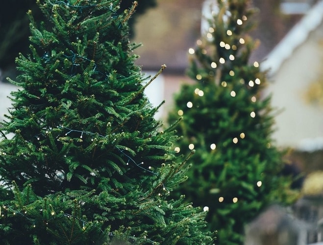 choisir sapin de Noël éco-responsable